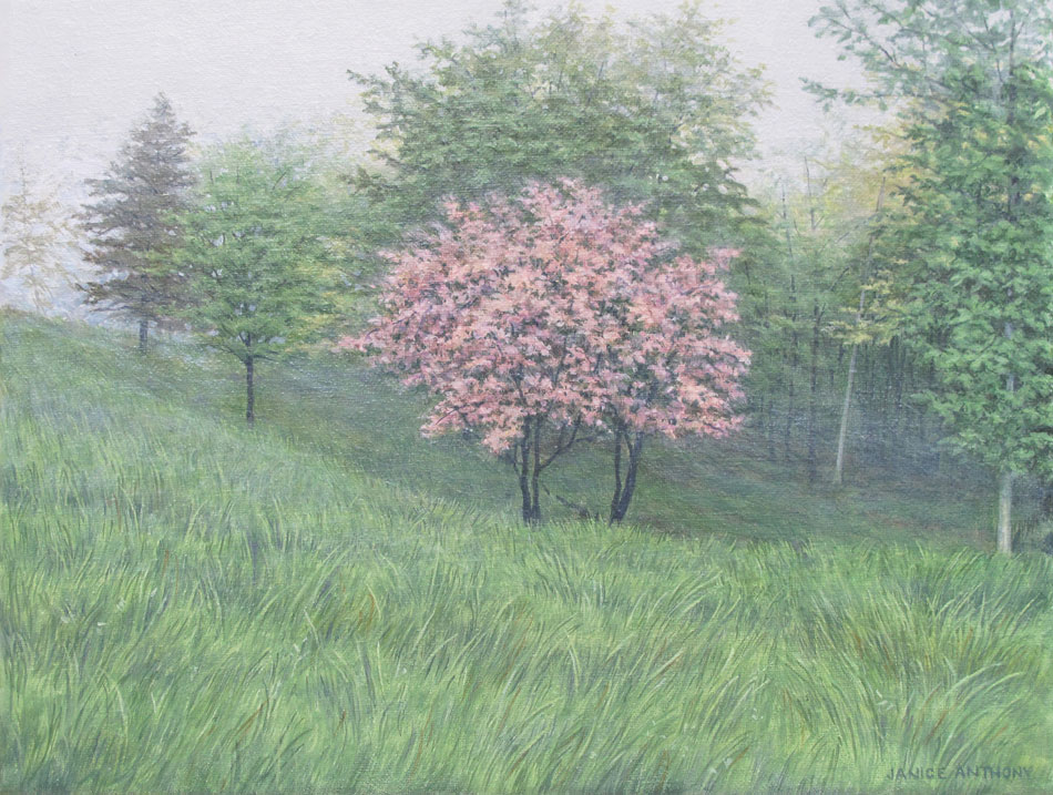 JANICE ANTHONY Spring's Apples, oil on linen, 10 x 13 inches