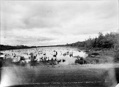 BERENICE ABBOTT Driki, c. 1966, vintage silver gelatin photograph, 11 x 14 inches