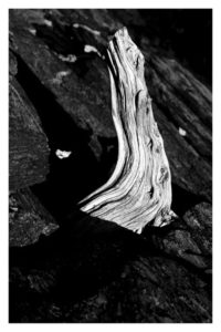 ALAN VLACH Driftwood Shore Path photopolymer gravure, 6 x 9.25 inches