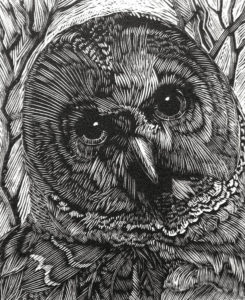 SIRI BECKMAN Barred Owl wood engraving, edition of 100, 3 x 2.75 inches $200