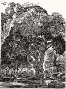 SIRI BECKMAN Old Cottonwood wood engraving, edition of 100, 8 x 6 inches $500