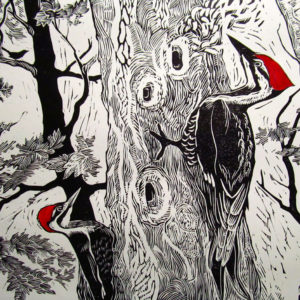 SIRI BECKMAN Pileated Woodpecker wood engraving, 10 x 10 inches