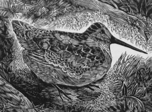 SIRI BECKMAN Woodcock wood engraving, 3 x 4 inches