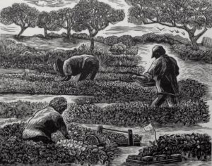 SIRI BECKMAN Strawberry Pickers framed wood engraving, edition of 50, 4 x 5 inches $500 framed