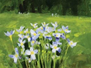 PHILIP FREY Wild Violets oil on canvas, 12 x 16 inches $1600