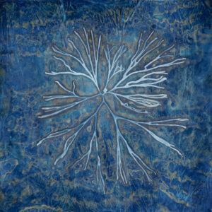 LISA TYSON ENNIS Algae III, Green Sea Fingers unique cyanotype on paper, museum glass 28 x 28 inches $2800